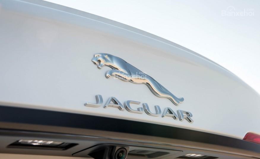 Thiết kế đuôi xe Jaguar XF 2016 đậm phong cách F-Type thể thao 7